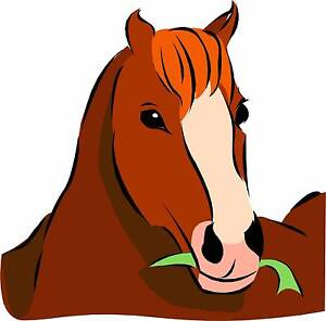 Wanted - Horse requiring exercise Gosford Gosford Area Preview