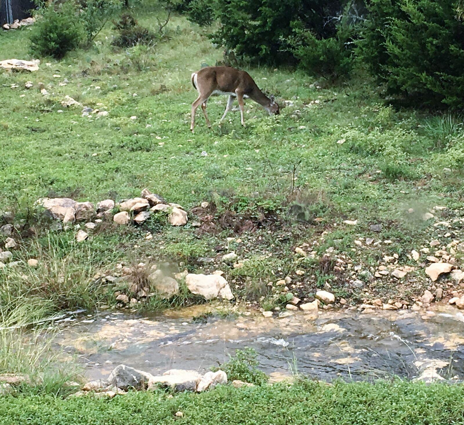El Coyote Ranch