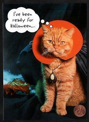 Halloween Kitten Cat Orange Tabby Costume Dracula Necklace  - Greeting Card  - Tabby Cat Costume
