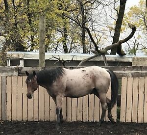 Gelding for part board