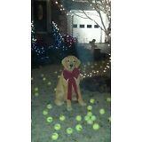 100  and 10 used tennis balls 110 total .Plz c pics ! no p.o box😁