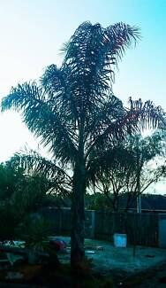 Plant clearance!!! Palms, agaves, yuccas, lemon, lime Ferntree Gully Knox Area Preview