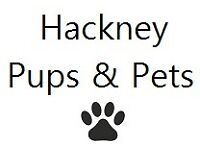 Dog-walking and pet care services in the Hackney area