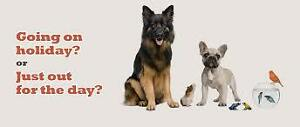 Dog walking/pet sitting services!