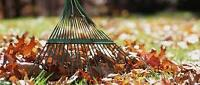 Need your leaves raked?