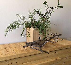 Handmade rustic jungle birdhouse Vaucluse Eastern Suburbs Preview