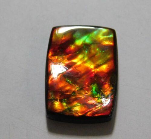 11.90 Cts Natural Canadian Ammolite Cabochon Loose Gemstone 20X14X3.5MM AU20