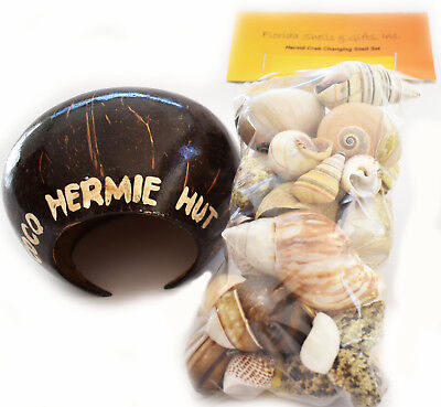 Crab Kit (Hermit Crab Starter Kit 35 Assorted Shells (1/2