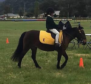 Beginners Pony Nemingha Tamworth City Preview