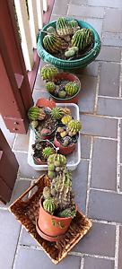 Assortment of cactus plants Old Toongabbie Parramatta Area Preview