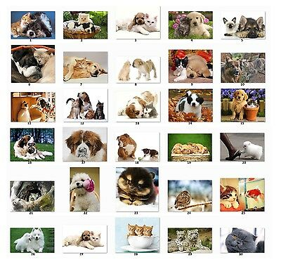 30 Personalized Return Address Labels Animal Pictures Buy 3 Get 1 Free C1