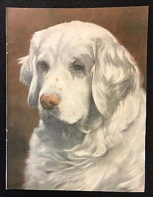 Original 1934 Colour Dog Print / Bookplate - CLUMBER SPANIEL, Sandringham Spark