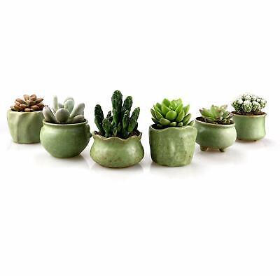 6 Pack Succulent Planter Pots 2.75-3