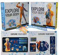 Set De 2 Construye Una Anatomía Cuerpo Esqueleto Muscle Educativo Estudio Modelo -  - ebay.es