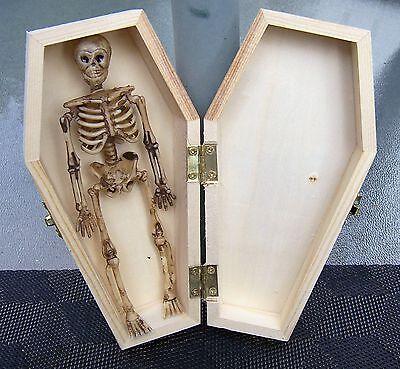 1  6  Skeletons   1 Coffin Hinged Unfinished Vampire Coffin Casket Craft