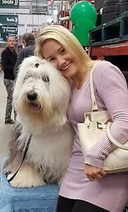 Dog walker Canberra Bruce Belconnen Area Preview
