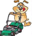 Mad Dog Mowing Darwin NT Rosebery Palmerston Area Preview