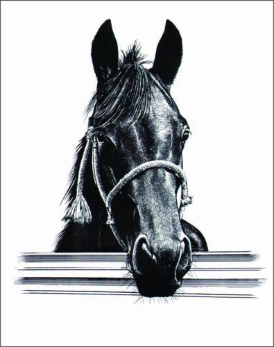 """Sticker 4""""x 5""""  Horse & Fence ,Equestrian,Cowboy, Cowgirl,Western Rider,Ranch,"""