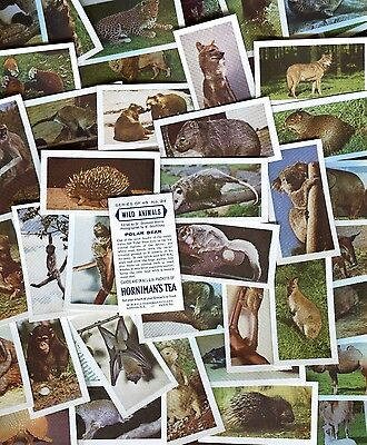 "HORNIMAN TEA 1958 SET OF 48 ""WILD ANIMALS"" TRADE CARDS"