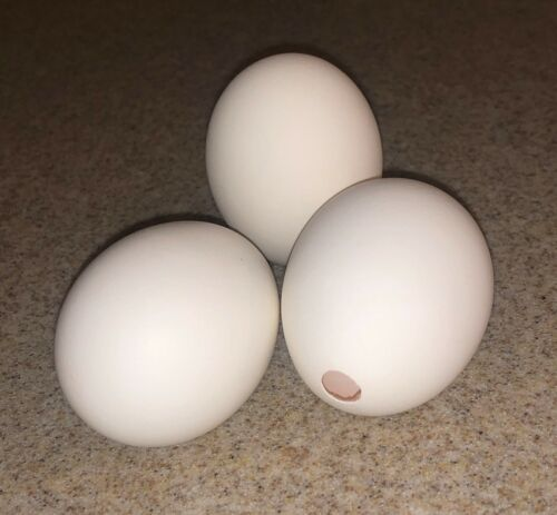 PERFECTLY HOLLOWED OUT EGG SHELLS! (1Dozen/18Count/30Count) Carton Included!