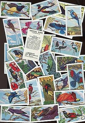 "MUSGRAVE TEA 1964 SET OF 25 ""TROPICAL BIRDS"" TEA CARDS"