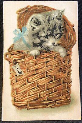 Kitten in a Basket  Vintage Cat Postcard