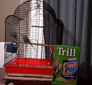 Female budgie with cage and seed Cranebrook Penrith Area Preview