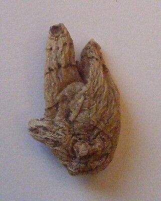 ONE LUCKY HAND ROOT - Voodoo,  Santeria, Wicca, New Age