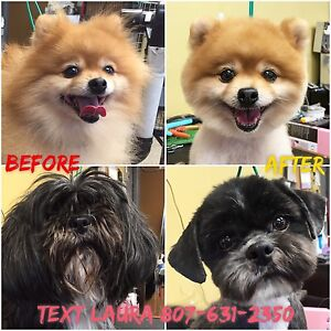 All-Breed Grooming 631-2350