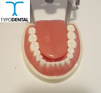 Dental Typodont Model 200 Works With Kilgore Brand Teeth - Tongue Model