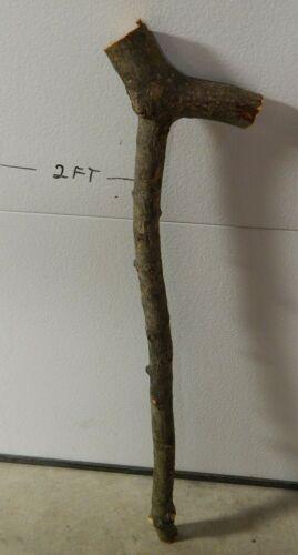 "Apple Wood Walking Cane Stick Blank 1 1/4""D 30""L Handle 6""L Crafts Woodworking"