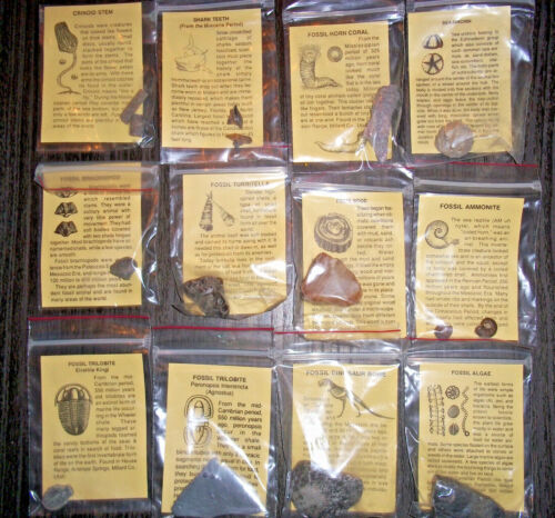 Fossil Collection - Set of 12 - With information cards about each one