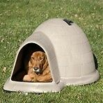 Free or reasonable dog house for dogs who have no protection
