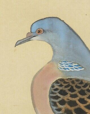 Pigeon JAPANESE PAINTING ANTIQUE HANGING SCROLL OLD From JAPAN Picture d945