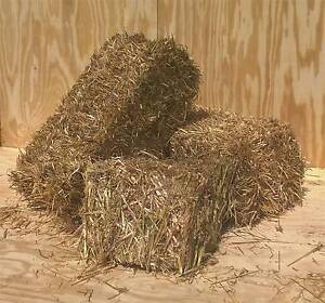 Oaten Hay small squares suit horses Irrewarra Colac-Otway Area Preview