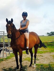 7yr old TB mare Torbay Albany Area Preview