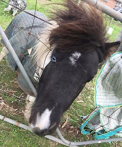 Lovely Paint Miniature Pony Officer Cardinia Area Preview
