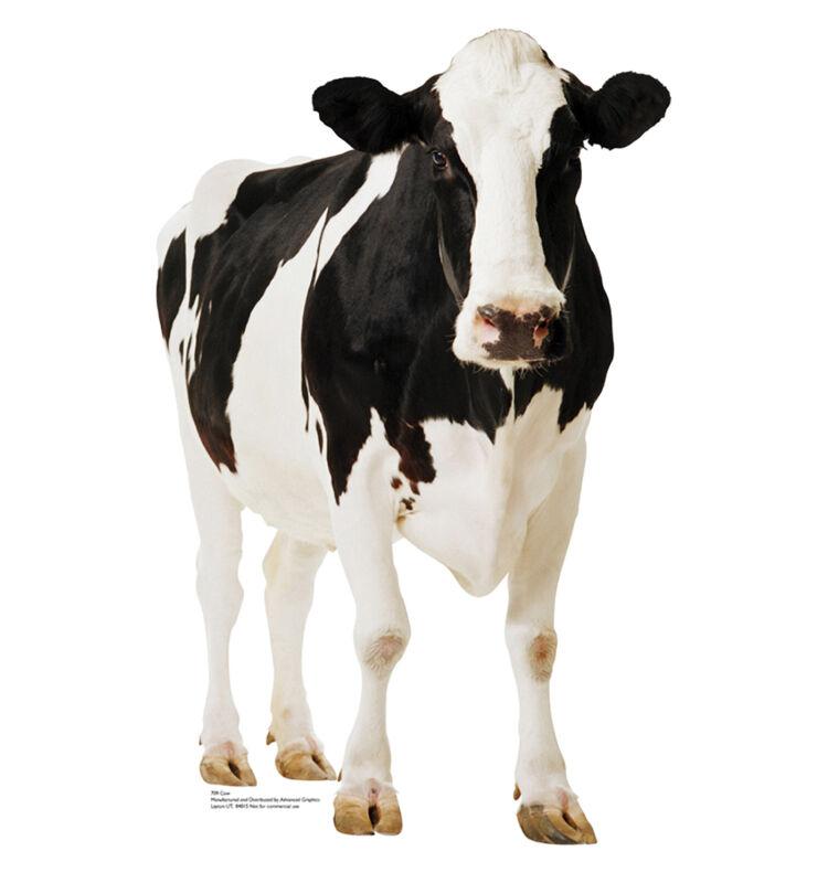DAIRY FARM MILK HOLSTEIN COW LIFESIZE CARDBOARD STANDUP STANDEE CUTOUT POSTER