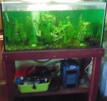 Fish tank with fish and accessories Montrose Glenorchy Area Preview