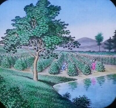 The First Psalm, A Tree Planted by Rivers of Waters, Magic Lantern Glass (A Tree Planted By Rivers Of Water)