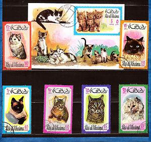 Les chats esp ces de f lins diff rentes 531a197t1 ebay - Differentes especes de pins ...