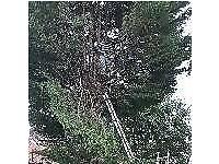 Gabriel's garden service,specialist tree surgeon ,rubbish clearance