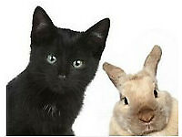 Available immediately - Free service, house and cat/small pet-sitting, flat/house sitter