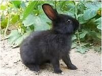 2 female rabbits 2 male rabbits