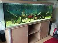 AQUA ONE 6FT 650L FISH TANK FULL SETUP WITH CABINET AND EXTERNAL FILTER