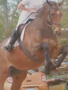Eventing/jumping/dressage Dubbo Dubbo Area Preview
