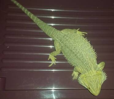 Hypo Male Central 2 years Brisbane City Brisbane North West Preview