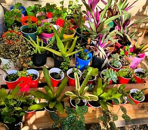 Lots of Potted Cheap Plants