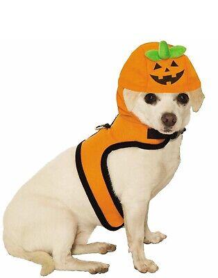 Jack ein Laterne Haustier Süß Halloween Kürbis Katze Hund Kostüm ()