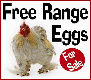 Free Range Eggs For Sale Sign